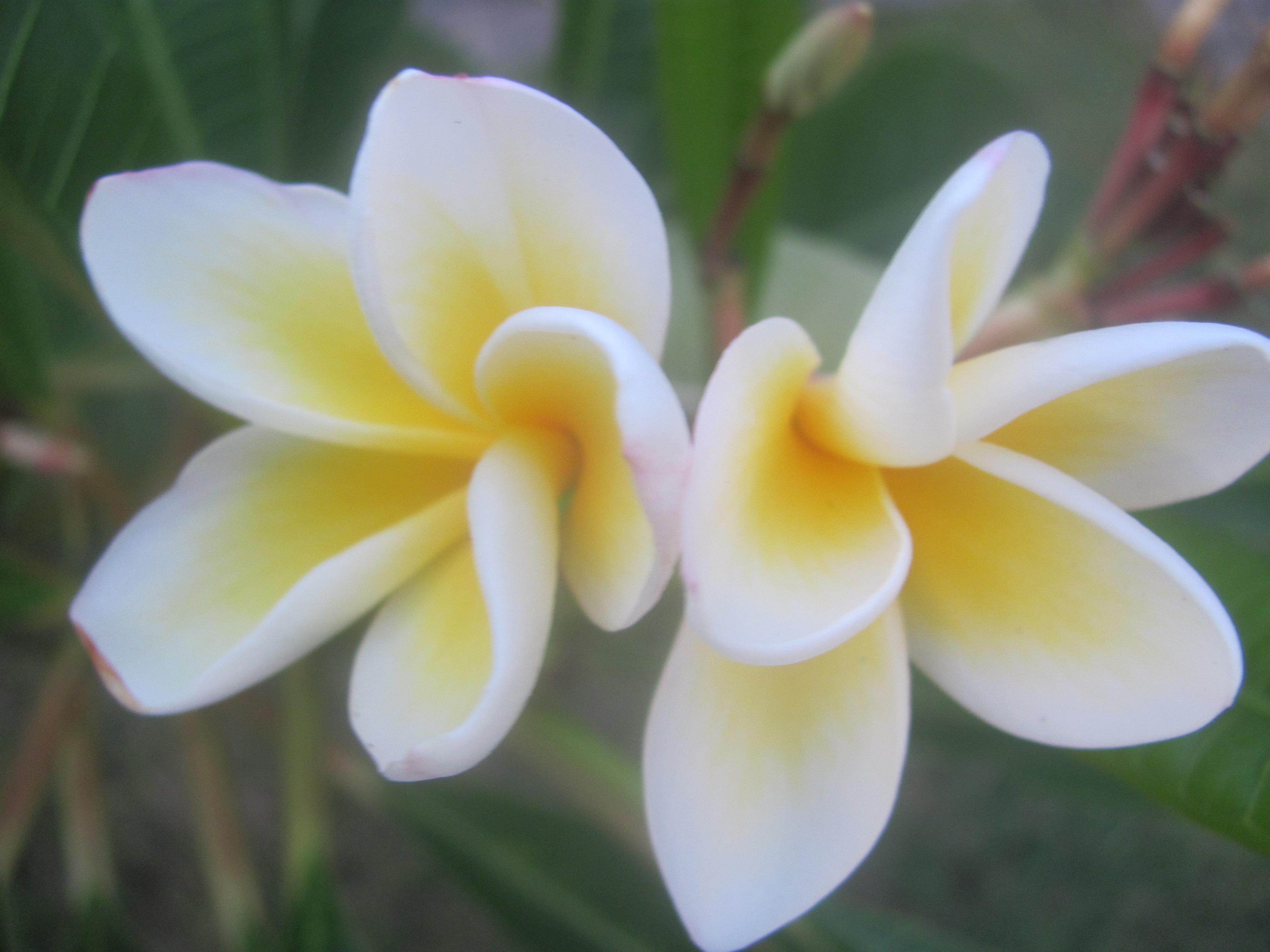 "Flores means ""Flowers"""