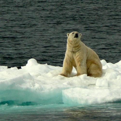 Svalbard, Norway Polar Bear