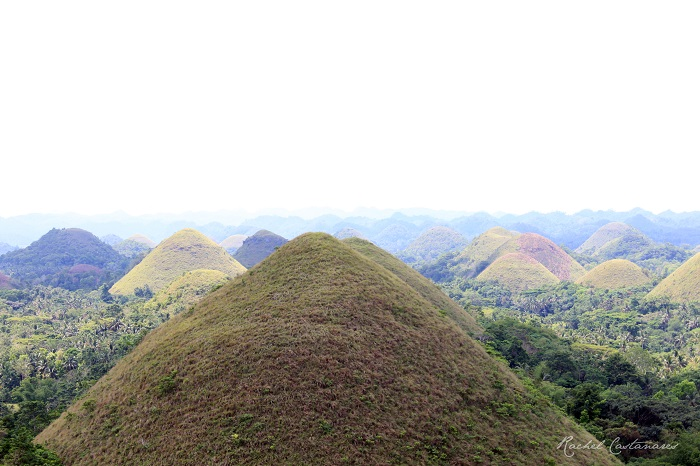 The Chocolate Hills are Bohol's most famous attraction. These unique landform was formed by the uplift of coral deposits and the action of rainwater erosion. There are 1,268 mounds scattered throughout the towns of Carmen, Sagbayan, and Batuan by Rachel Castanares.