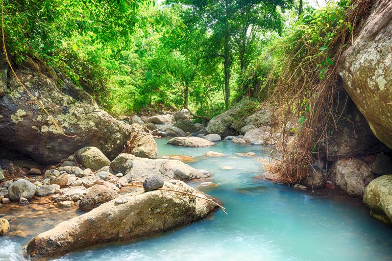Rainforest, Bali