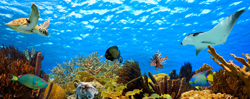 Best Places To Snorkel In The Caribbean Trip Sense