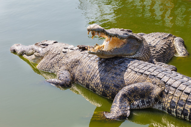 Ixtapa's crocodile estuary allows visitors to take part in an animal excursion while staying a safe distance from wildlife. See the huge reptiles in their natural environment at the Cocodrilario, which is a crocodile sanctuary.