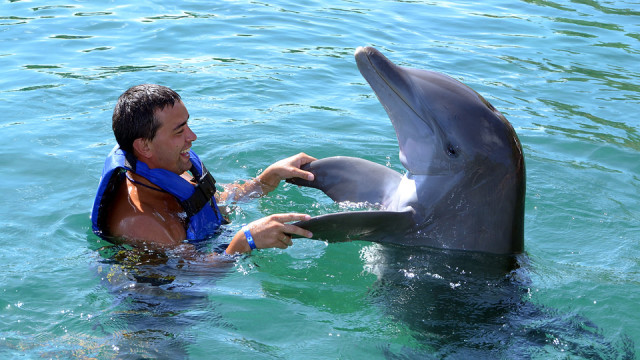 Take part in an animal excursion and swim with the dolphins at Puerto Vallarta's dolphinarium. The centre offers chances to meet the animals and swim with them, depending on your comfort level.