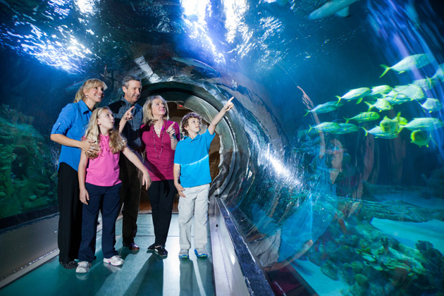 The SEA LIFE Orlando Aquarium has a walk-through tunnel for a 360-degree view of creatures