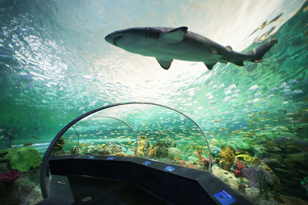 Visit Ripley's Aquarium of Canada, located at the base of the CN Tower