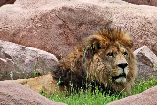 Visit the Toronto Zoo, just outside the city, and experience environments from around the world in one place.