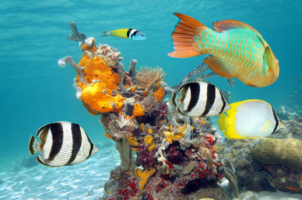 Cozumel Scuba Diving Best Scuba Diving In The World