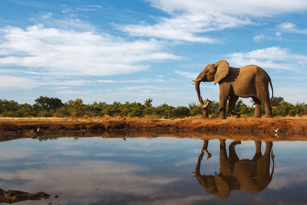 Botswana is on our list of top 2016 destinations, for its amazing safaris