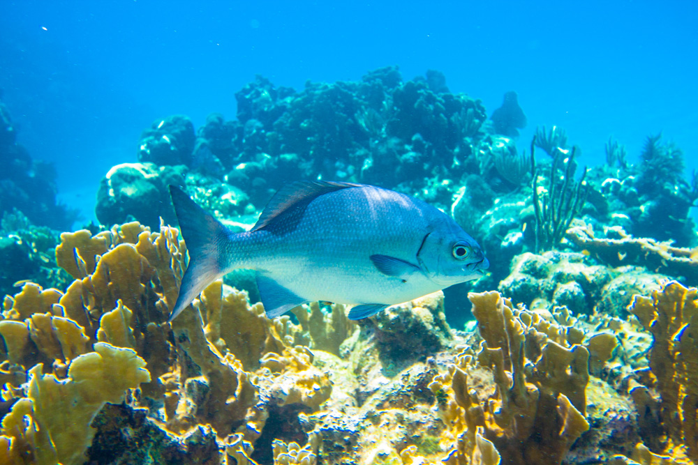 Your guide to roatan scuba diving trip sense - Roatan dive sites ...