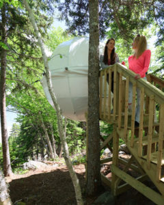 Cocoon Tree Bed, Cape Breton Highlands National Park