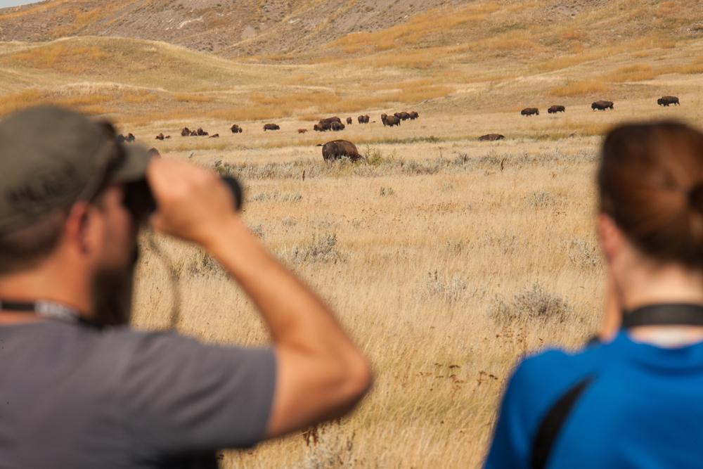 Grasslands Canada National Park bison tour