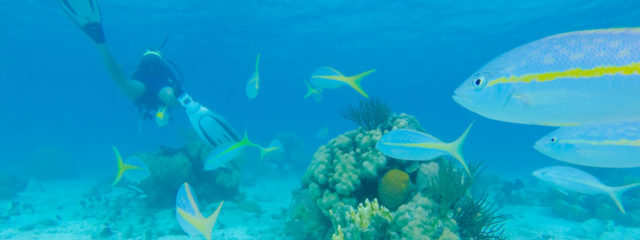 Scuba diving in Cuba: 2018 guide