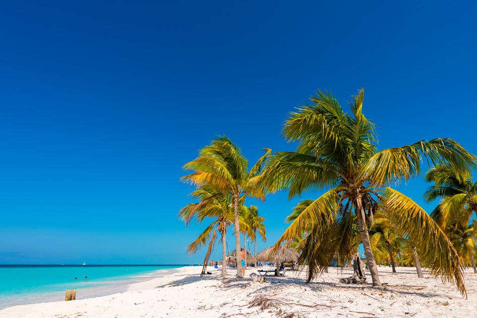 Palm trees on white sand beach stretching out to clear waters Playa Sirena