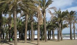 Palm Beach Torremolinos